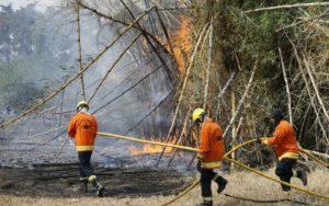 incêndio parque águas claras