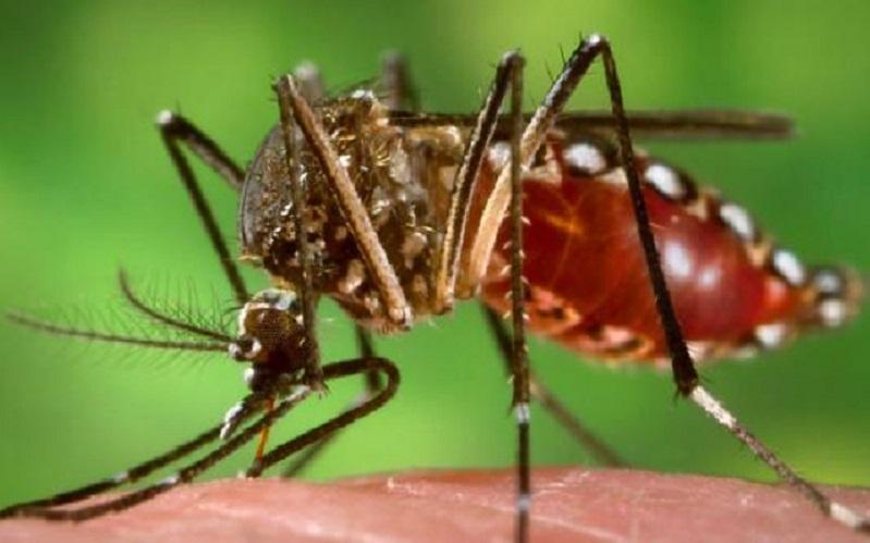 É preciso ter muito cuidado com o mosquito Aedes aegypti
