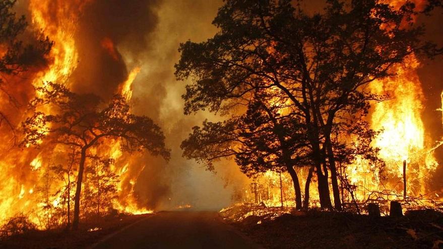queimada fogo floresta