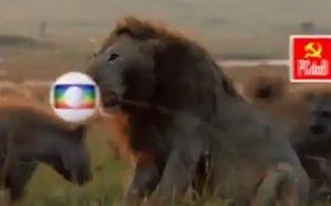 Bolsonaro vídeo do leão