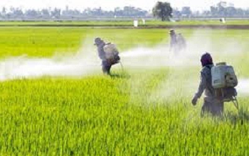 Ativistas fazem hoje ato contra o uso do agrotóxico na agricultura