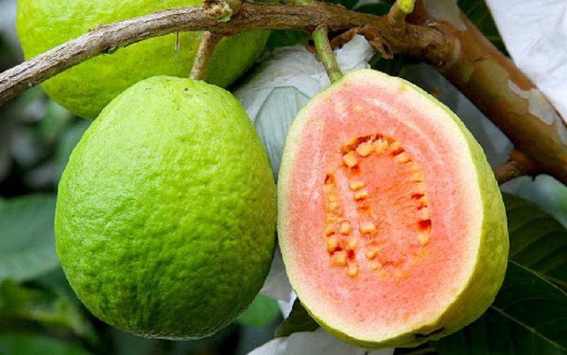 Rota da fruticultura no Entorno terá investimento de R$ 1 milhão