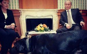 Koni, de Vladimir Putin