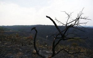 Cerrado queimada e desmatamento