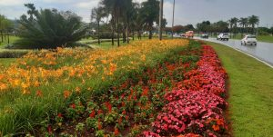 Brasília jardim flores DF