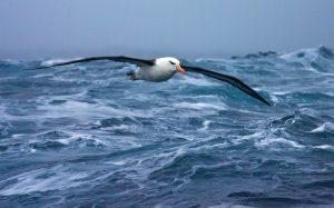 Oceano gaivota